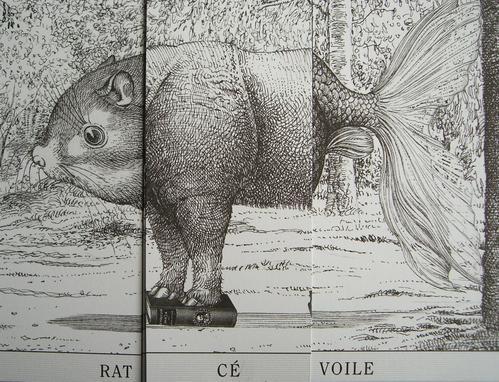 M7_rat-cé-voile1
